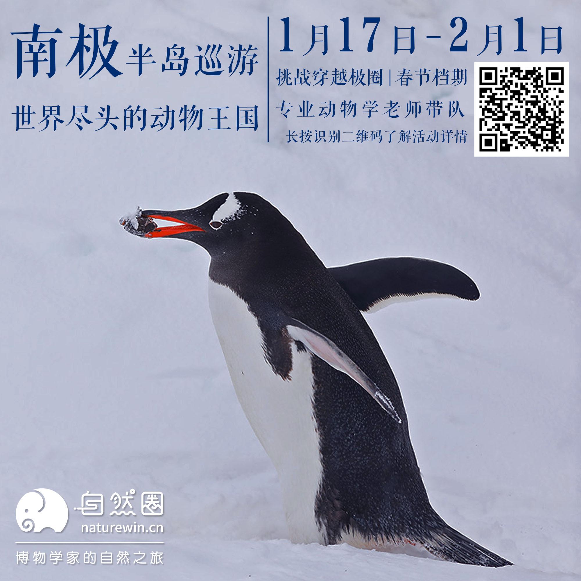 20200117南极.jpg