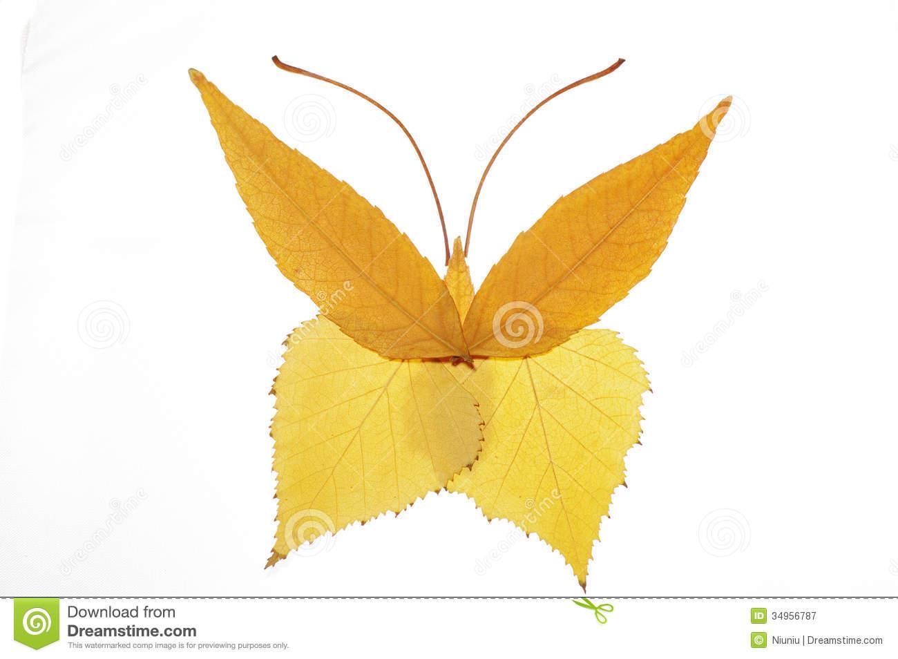 collage-painting-leaves-butterfly-leavesinteresting-34956787.jpg